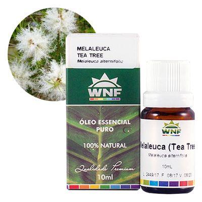 wnf-oleo-essencial-melaleuca-10ml-loja-projeto-verao-planta